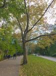 park-tree-line